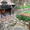 Однокомнатная в Феодосии для отдыха, центр, частный сектор - Изображение #5, Объявление #215735