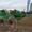 Грабли колесно пальцевые ворошилки ГКП-7, 3 цена 170 т.р. #33657