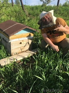 Продам Отличный мед тел. 8 950 273 7961 Кемерово - Изображение #1, Объявление #1570110
