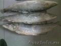 Предлагаю см деликатесную рыбу нельму вес рыбы от 5 кг. .