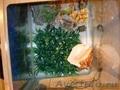 Аквариум+био.фильтр+декор