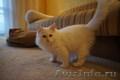 Котенок Невской маскарадной