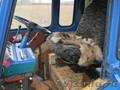 ПРОДАМ МТЗ - 82 В КРАПИВИНСКОМ  - Изображение #8, Объявление #626076