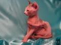 Три самых красивых котенка канадского сфинкса
