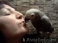 Большие попугаи птенцы.Доставка по Р.Ф. - Изображение #5, Объявление #747300