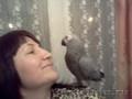 Большие попугаи птенцы.Доставка по Р.Ф. - Изображение #6, Объявление #747300