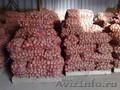 Картофель продовольственный Любава