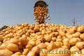 Фермерское хозяйство продаст овощи  только оптом