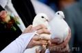 Запуск свадебных голубей (аниматор – ангел)