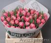 Тюльпаны оптом Кемерово к 8 марта 2016 , Объявление #1366614